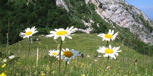 Fotos de flores: margaritas