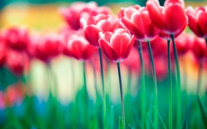 Importancia de las flores